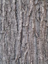 Bark Grow