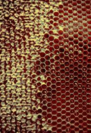 Honey Closed Red Yellow