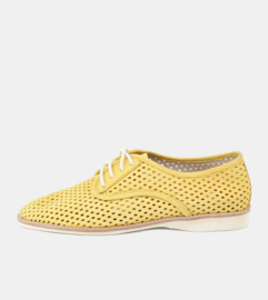 Derby Punch Yellow