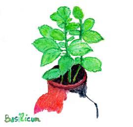 Bascilicum (genovese) met zakje biologisch zaad op voorraad