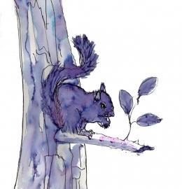 Eekhoorn  (N4)