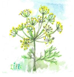 Dille, dubbele kaart met envelop en een zakje wilde bloemenzaden