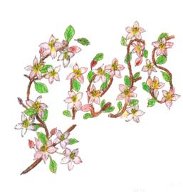 Appelbloesem met mix bloemenzaden