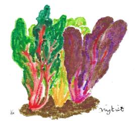 Snijbiet ( Beta vulgaris) plantenkaart met recept