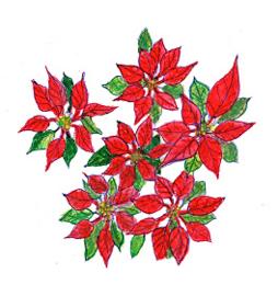 Kerstster Poinsettia Dubbele kaart met enveloppe