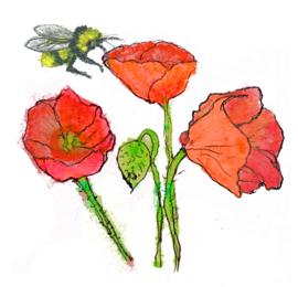 Klaprozen met wilde bloemenzaden