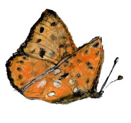 Vlinder met zakje mix wilde bloemenzaden
