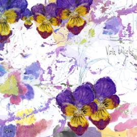 Driekleurig viooltje (Viola tricolor) met een zakje vioolzaadjes!