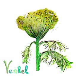 Venkel (bladvenkel) met zakje biologische zaden op voorraad