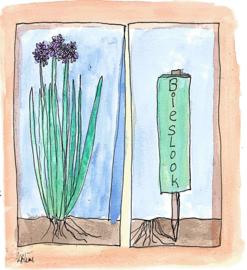 Bieslook (Allium schoenoprasum) kruidenkaart met recept