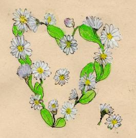 Madeliefjeshart met mix wilde bloemenzaden