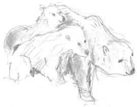 Ijsbeer met jongen