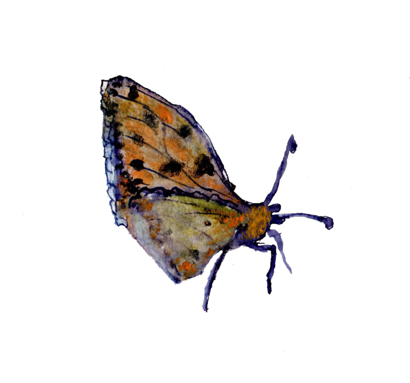 Parlemoervlinder (dubbel klein formaat)