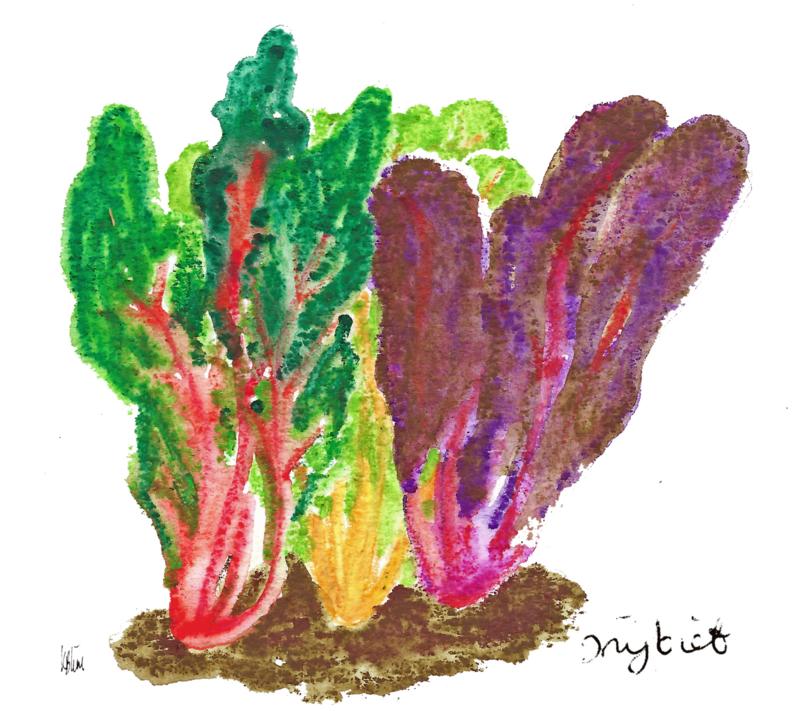 Snijbiet ( Beta vulgaris) vergeten groente plantenkaart met recept