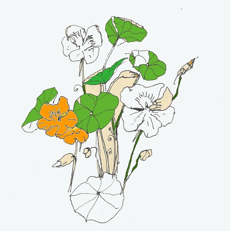 Oost-Indische kers (Tropaeolum majus) kruidenkaart met recept
