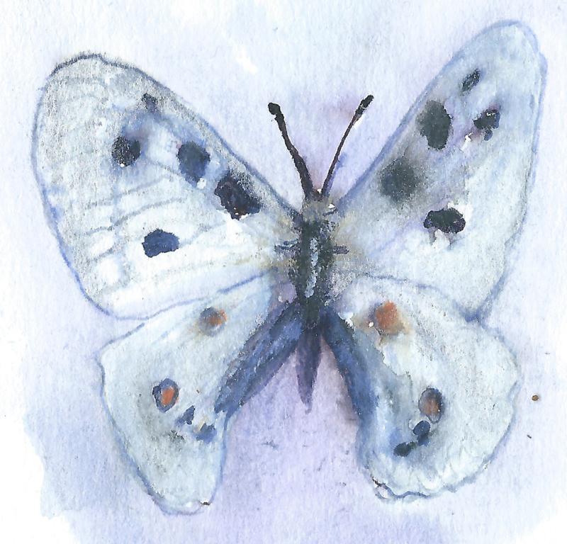 Witte vlinder (dubbel klein formaat)