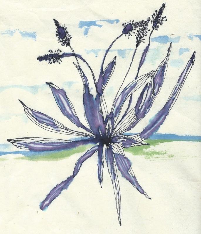 Smalle Weegbree (Plantago lanceolata) kruidenkaart met recept