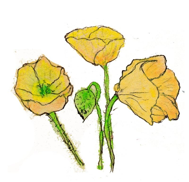 Lentebloemen met wilde bloemenzaden