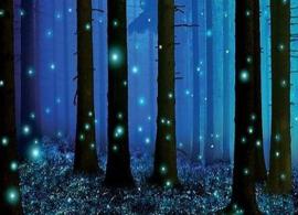 Dreamy Summer Nights