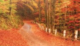 Woodland Road Trip