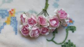 Wit/rose