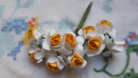 Wit/oranje