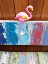 Flamingo met oranje vleugel