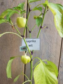 Witte Paprika