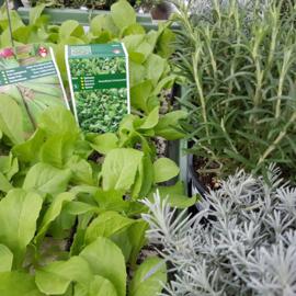 Wat kan ik planten in februari