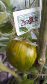 Zebra tomaat, gestreepte tomaat
