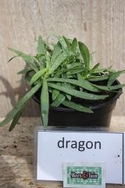 Dragon, franse dragon