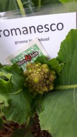 Romanesco, groene bloemkool plant