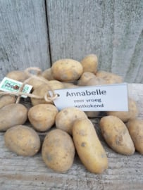 Pootaardappel Annabelle 1 kilo