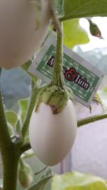 Witte ei aubergine