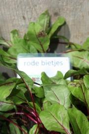 Rode Bietjes, plantjes