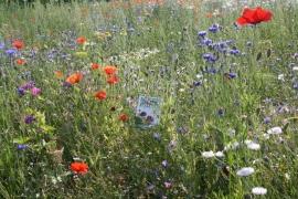 Wildbloemenmengsel 50 gram