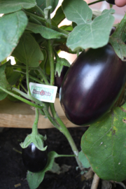 Snack aubergine