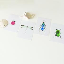 KAARTJE | zeegroene libelle