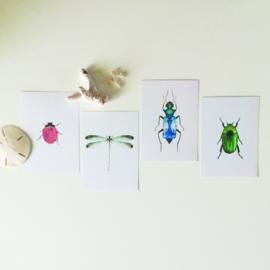 KAARTJE | rood kriebelbeestje