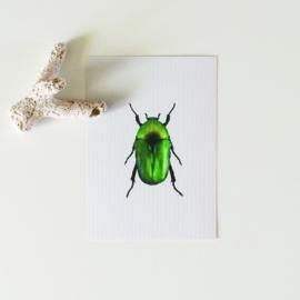 KAARTJE | groen kevertje