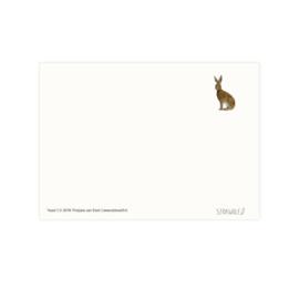 Postkaart - Haas