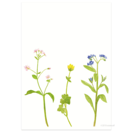 Postkaart - Lentebloemen