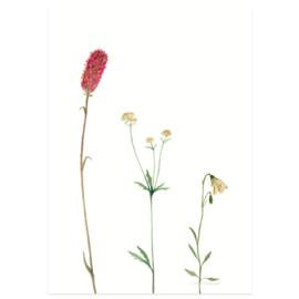 Postkaart - Bergbloemen roze