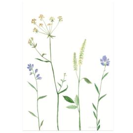 Postkaart - Bergbloemen lila