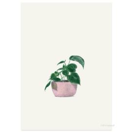 Postkaart - Philodendron Cordatum