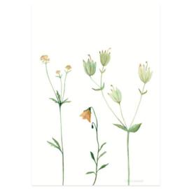 Postkaart - Bergbloemen oranje