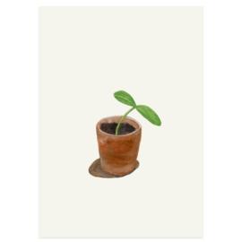 Postkaart - Pompoenplantje