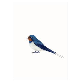 Postkaart - Boerenzwaluw