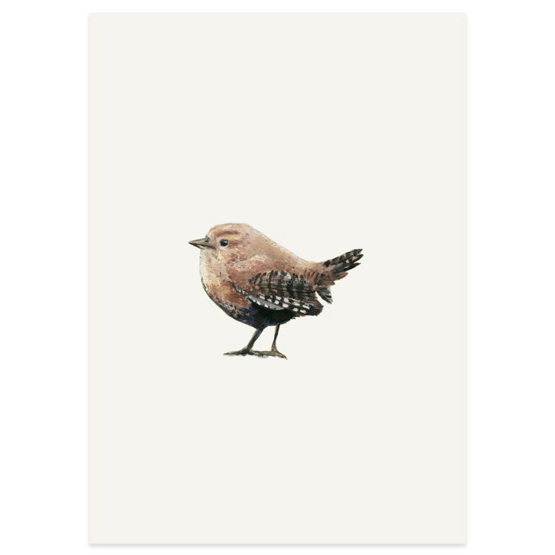 Postkaart - Winterkoninkje