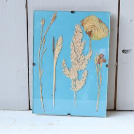 Lijstje droogbloemen